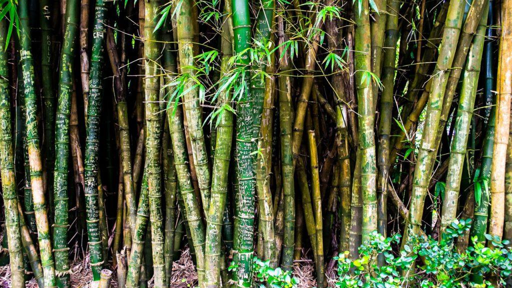 Nature-Quelle-Pixabay-CC0